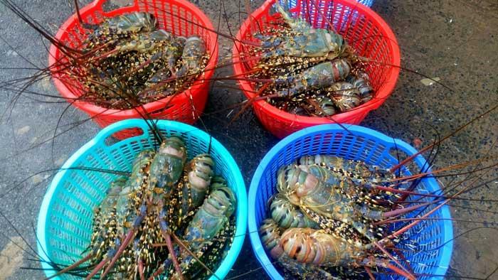 Mua bán tôm hùm tươi, đông lạnh tại Hà Nội