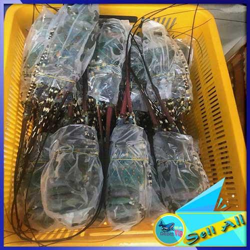 Nơi bán tôm hùm đông lạnh size 700gr - 1000gr chất lượng, giá rẻ, giao hàng tận nơi