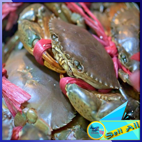Purchase price of Crab cocoa full size in Hanoi