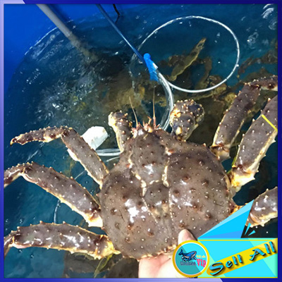 Buy Crab King Crab best price in vietnam
